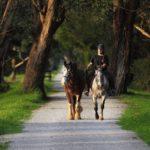 Trail horses - James McEwan