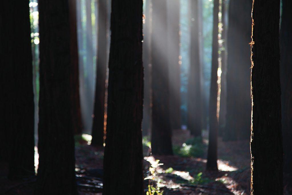 Kate Baker – Luminance, The Redwoods