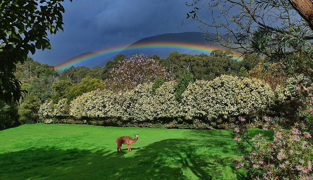 People's Choice: Rose Sherriff – Little Joe's Rainbow