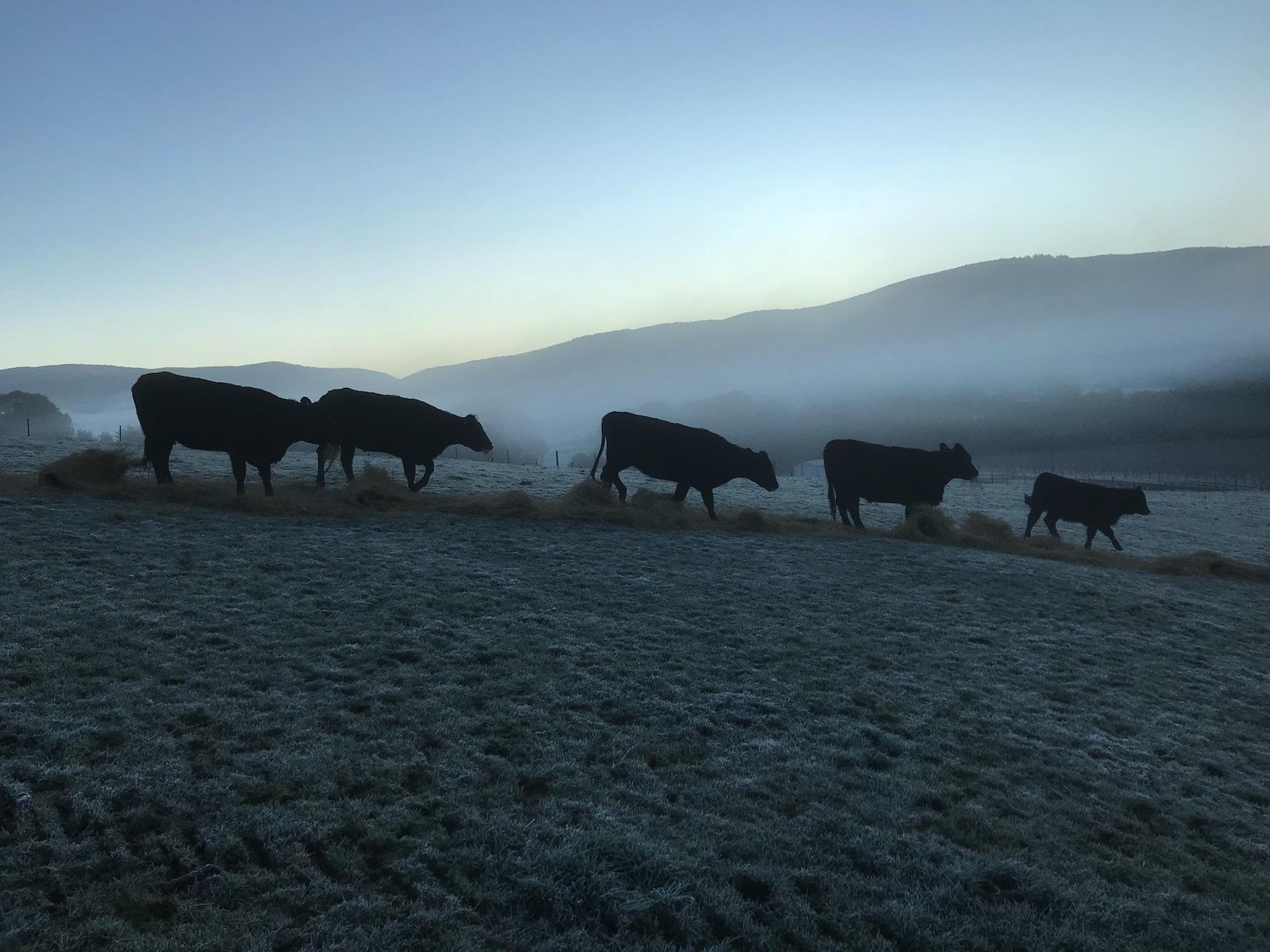 Breakfast on a frosty morn